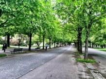 RunSoleRun_Sole Bassett_Geneve Marathon 10_entrenamiento_Parc des Bastions